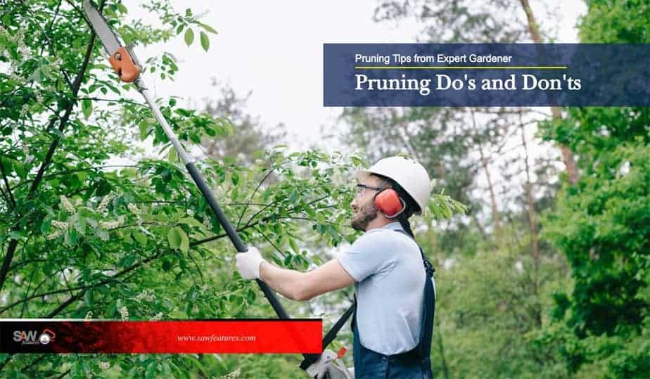 Pruning Tips from Expert Gardener
