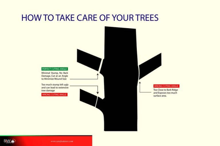 How to Take Care of your Trees